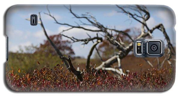 Big Meadows Fallen Tree Galaxy S5 Case