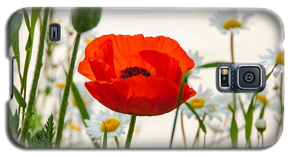 Big Red Poppy Galaxy S5 Case