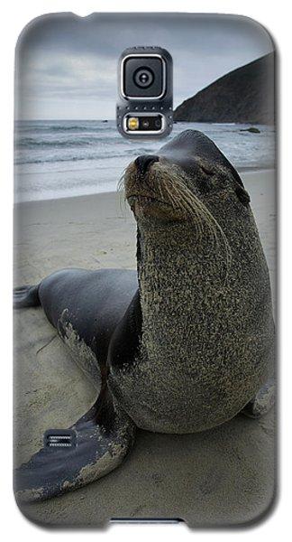 Big Seal Galaxy S5 Case