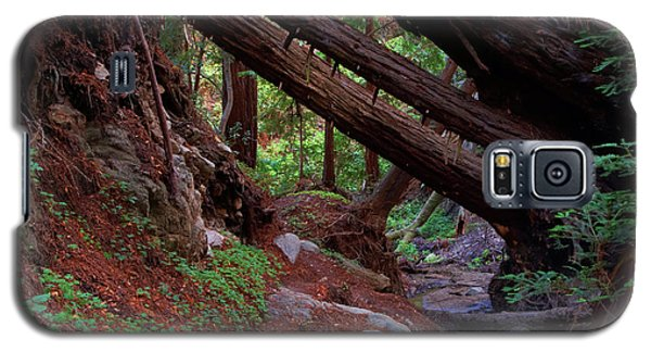 Big Sur Redwood Canyon Galaxy S5 Case
