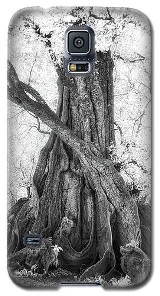 Big Tree Galaxy S5 Case