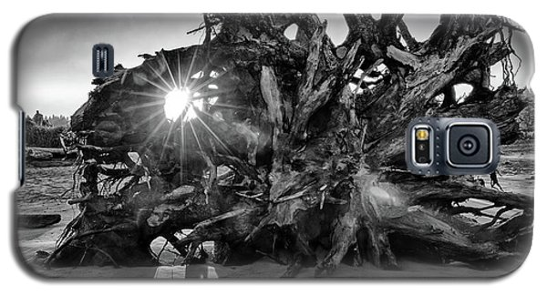 Big Tree On The Beach At Sunrise In Monochrome Galaxy S5 Case