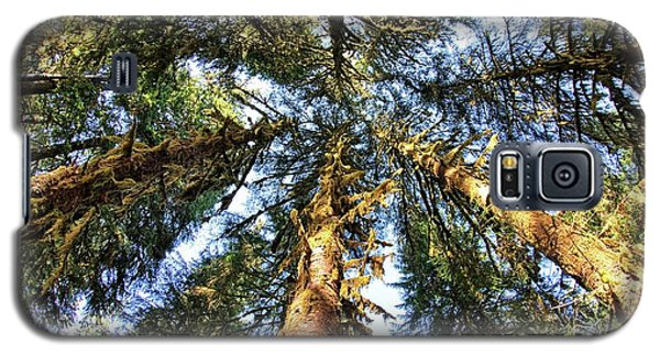 Big Trees In Olympic National Park Galaxy S5 Case