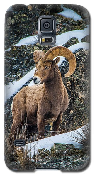 Bighorn Ram 2 Galaxy S5 Case