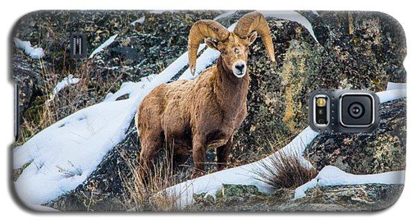 Bighorn Ram 3 Galaxy S5 Case