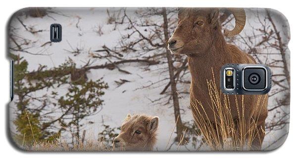 Bighorn Ram And Kid Galaxy S5 Case