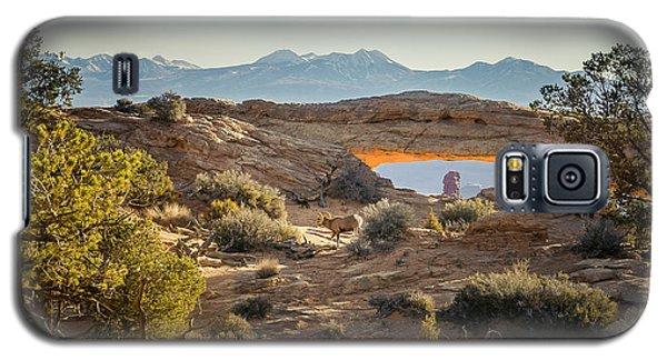 Bighorn Sheep And Mesa Arch Galaxy S5 Case