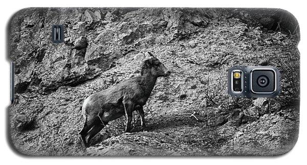 Bighorn Sheep Ewe On Wolf Creek Pass Galaxy S5 Case