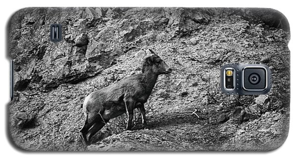 Bighorn Sheep Ewe On Wolf Creek Pass Galaxy S5 Case