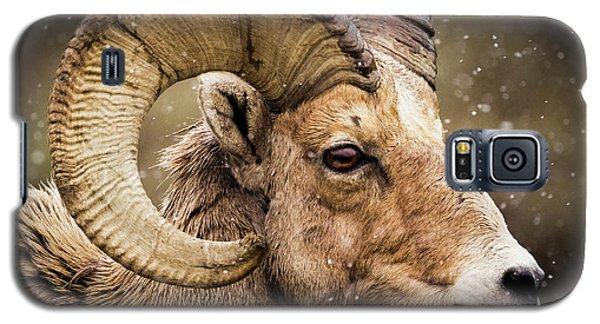 Bighorn Sheep In Winter Galaxy S5 Case