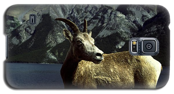Galaxy S5 Case featuring the photograph Bighorn Sheep by Sally Weigand