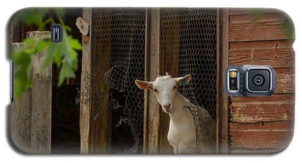 Galaxy S5 Case featuring the photograph Billy Goat by Dan Traun