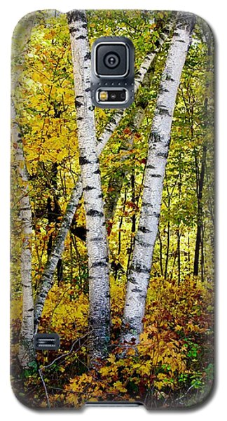 Birch In Gold Galaxy S5 Case