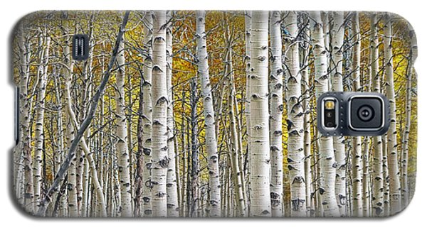 Birch Tree Grove With A Touch Of Yellow Color Galaxy S5 Case