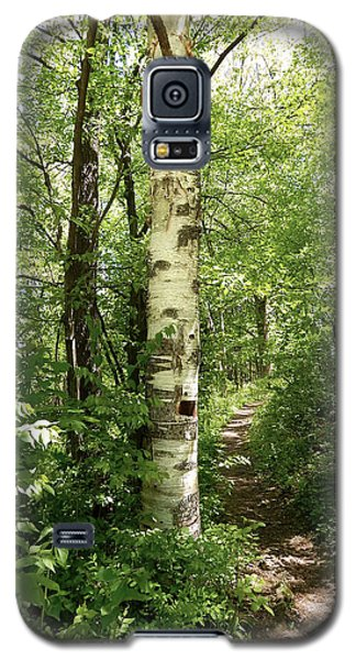 Birch Tree Hiking Trail Galaxy S5 Case by Phil Perkins