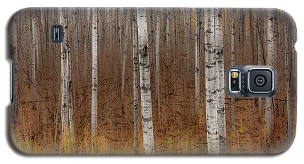 Birch Trees Abstract #2 Galaxy S5 Case