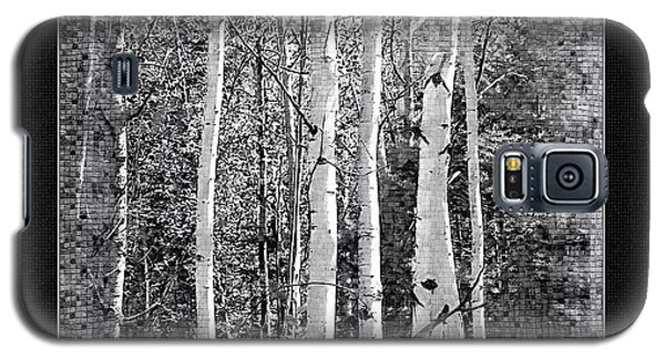 Galaxy S5 Case featuring the photograph Birch Trees by Susan Kinney