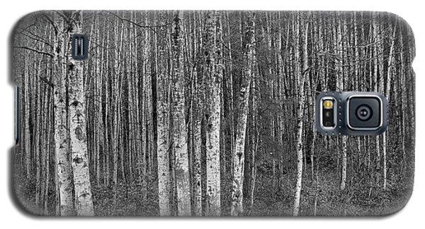 Birch Tress Galaxy S5 Case