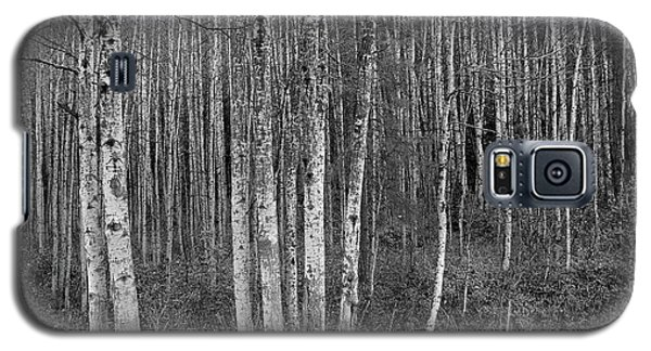Birch Tress Galaxy S5 Case
