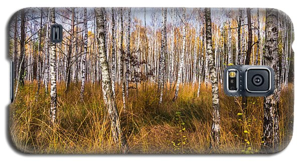 Birches And Grass Galaxy S5 Case