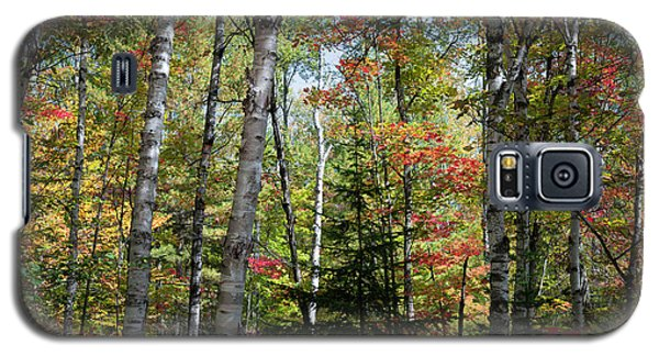 Galaxy S5 Case featuring the photograph Birches In Fall Forest by Elena Elisseeva