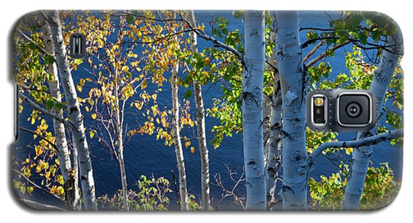 Galaxy S5 Case featuring the photograph Birches On Lake Shore by Elena Elisseeva
