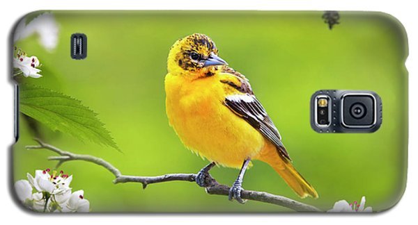 Bird And Blooms - Baltimore Oriole Galaxy S5 Case by Christina Rollo