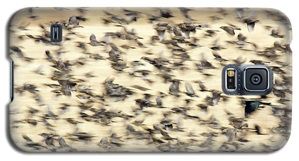 Bird Blizzard Galaxy S5 Case