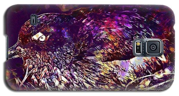 Auklets Galaxy S5 Case - Bird Cassins Auklet Crested Birds  by PixBreak Art