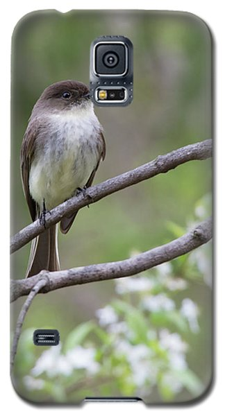 Bird - Eastern Phoebe Galaxy S5 Case