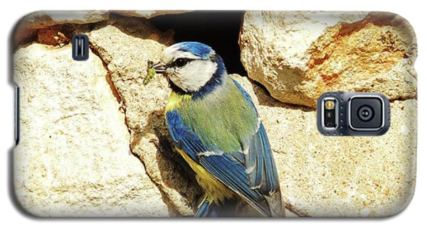 Bird Feeding Chick Galaxy S5 Case