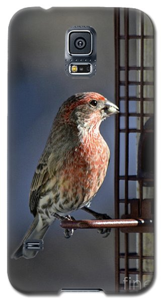 Bird Feeding In The Afternoon Sun Galaxy S5 Case