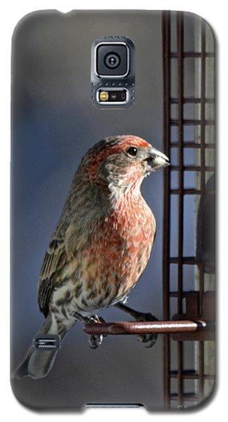 Bird Feeding In The Afternoon Sun Galaxy S5 Case