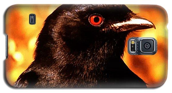 Galaxy S5 Case featuring the photograph Bird Friend  by Colette V Hera  Guggenheim