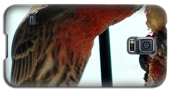 Bird Hits The Jackpot Galaxy S5 Case