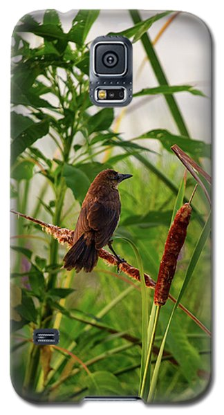 Bird In Cattails Galaxy S5 Case