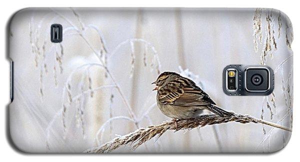 Bird In First Frost Galaxy S5 Case