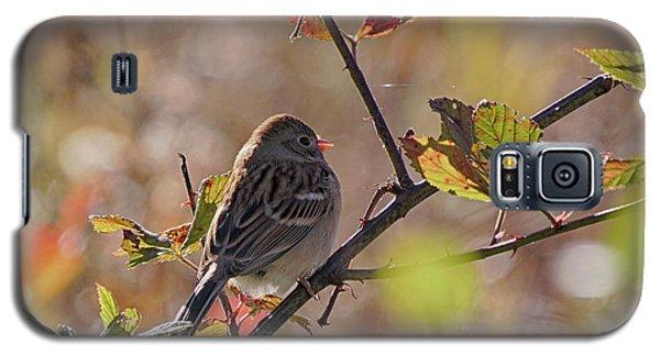 Bird In  Tree Galaxy S5 Case