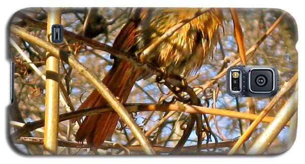Bird In Winter Galaxy S5 Case
