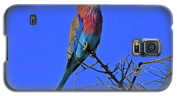 Bird - Lilac-breasted Roller Galaxy S5 Case