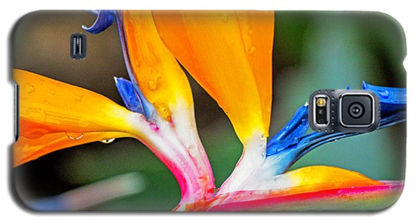 Bird Of Paradise After The Rain Galaxy S5 Case