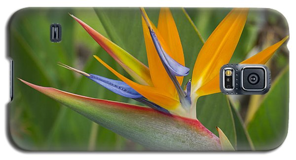 Galaxy S5 Case featuring the photograph Bird Of Paradise by Christina Lihani