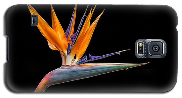 Galaxy S5 Case featuring the photograph Bird Of Paradise Flower On Black by Rikk Flohr