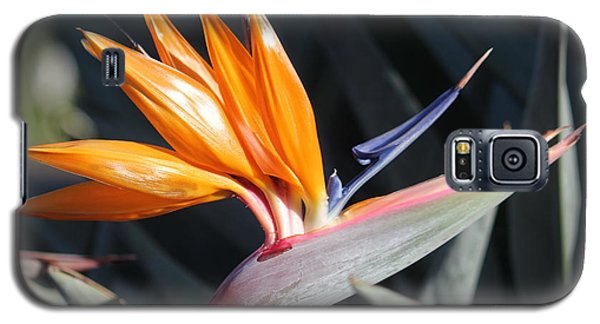 Galaxy S5 Case featuring the photograph Bird Of Paradise by Wilko Van de Kamp