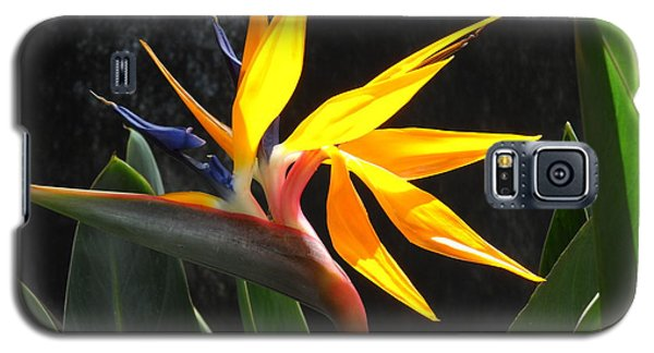 Bird Of Paradise Galaxy S5 Case by Yolanda Koh