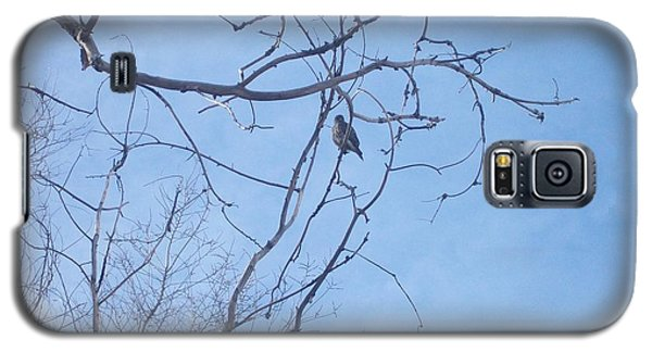Bird On A Limb Galaxy S5 Case