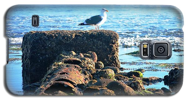 Bird On Perch At Beach Galaxy S5 Case