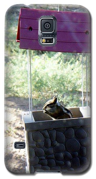 Bird Seed Thief Chipmunk Galaxy S5 Case
