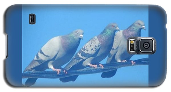 Bird Trio Galaxy S5 Case