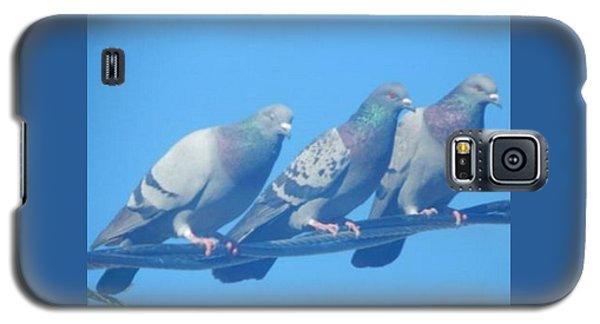Bird Trio Galaxy S5 Case